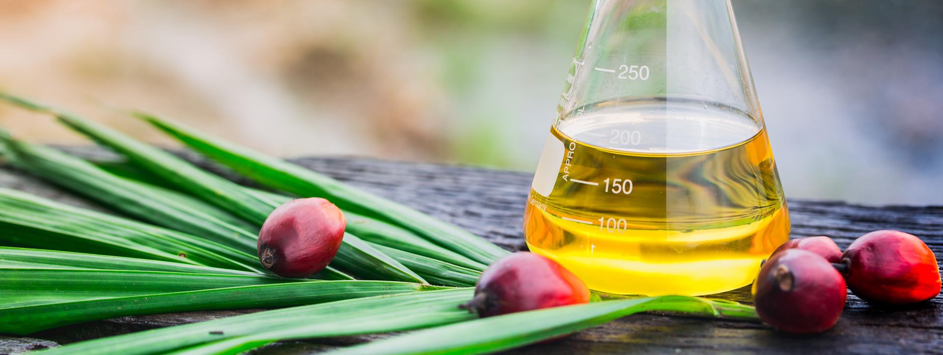 oleo-palme-biodiesel-banner
